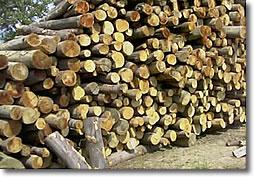 Il focolare vendita legna da ardere commercio pellet umbria for Vendita legna da ardere